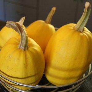 生酮飲食期間可以吃金絲瓜嗎?